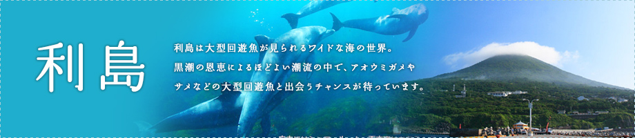 利島~利島は大型回遊魚が見られるワイドな海の世界。黒潮の恩恵によるほどよい潮流の中で、アオウミガメやサメなどの大型回遊魚と出会うチャンスが待っています。